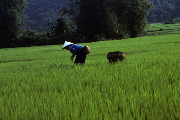 Vietnam_017