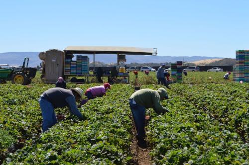 Farmworkers santa maria california