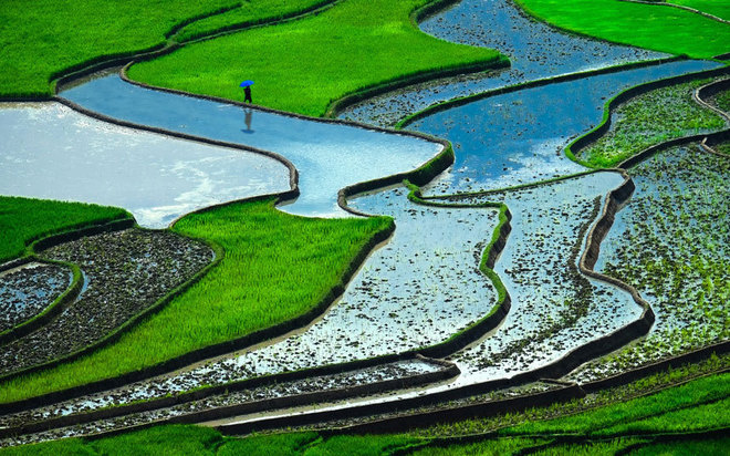 Vietnam-terraced-rice-fields