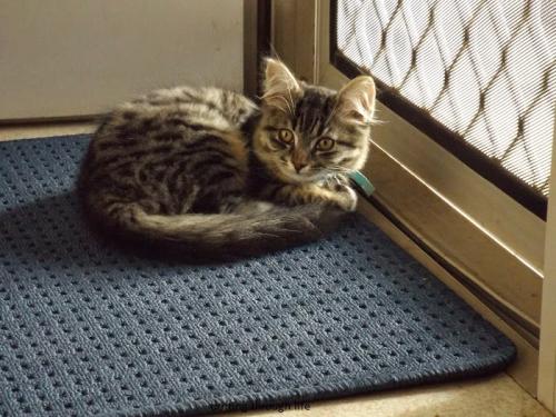 Cat on mat 4